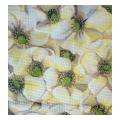Cluster of White Flowers Needlepoint Canvas