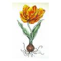 Tulip Botanical Needlepoint Canvas